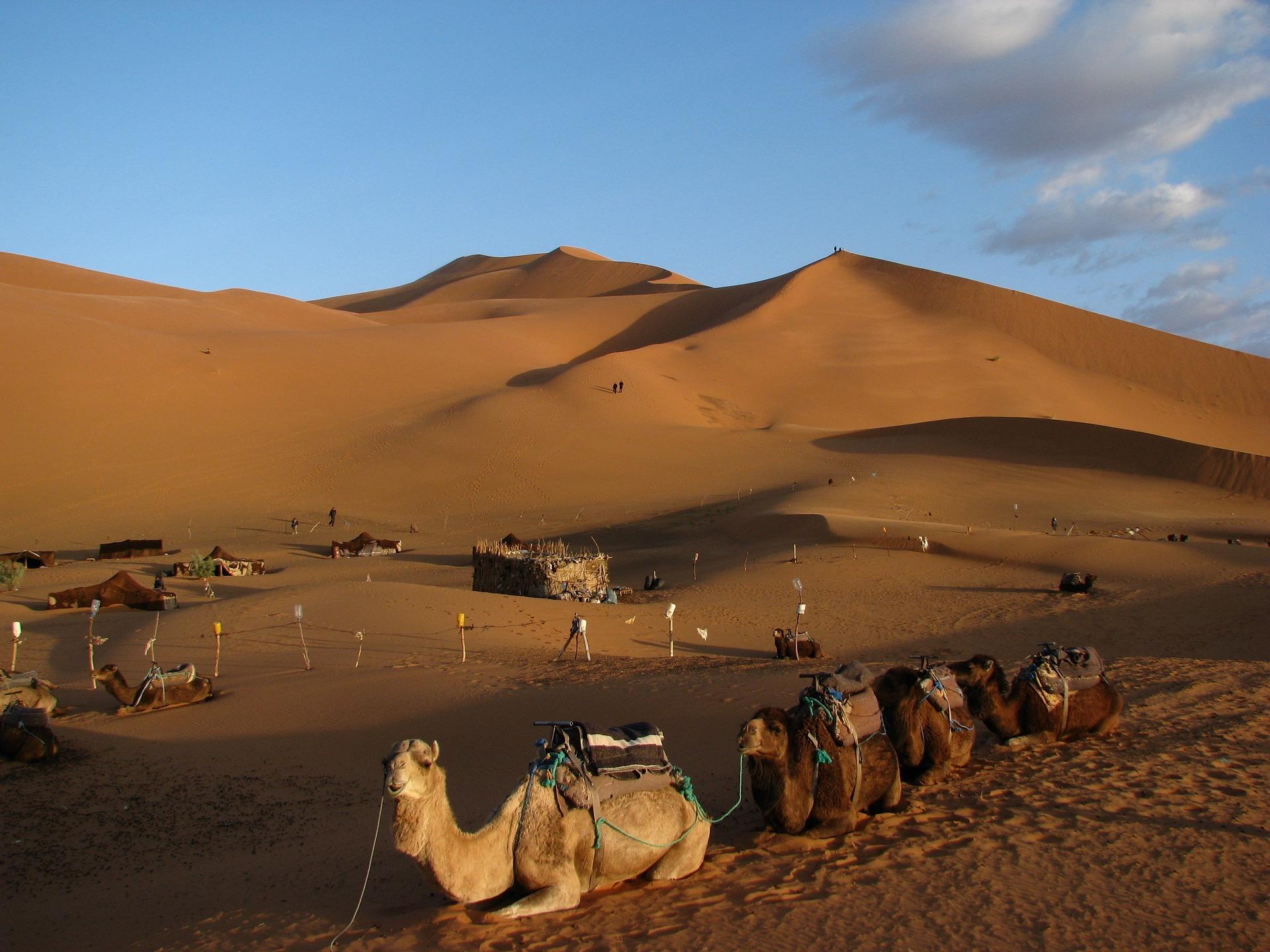camel-1632243_1920