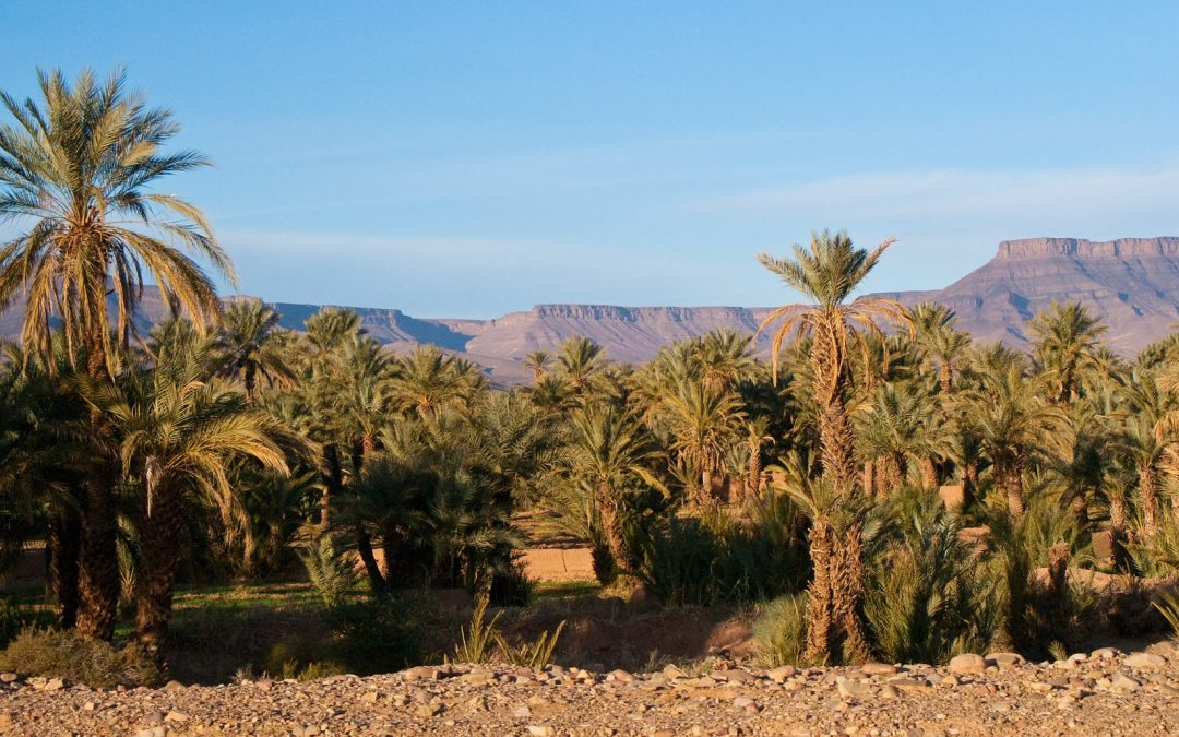 4 day tour: Dunes and Palm Trees